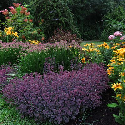 Perennial flowers the best selection of perennial plants bay perennial flowers the best selection of perennial plants bay state perennial farm mightylinksfo